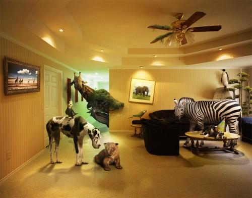 Ace Ventura Room