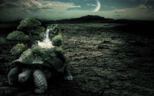 Photo Manipulation Turtle