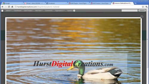 Transparent Image Watermark