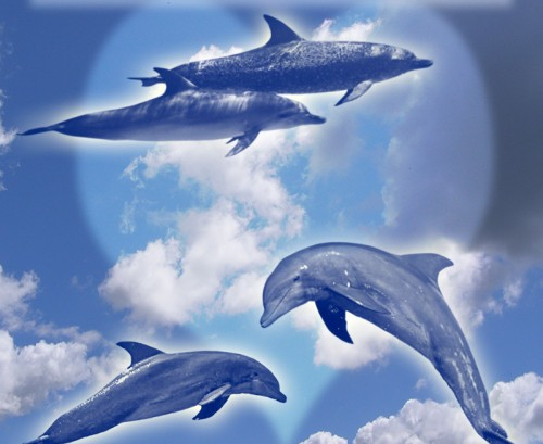 10 Photoshop Dolphins Brushes