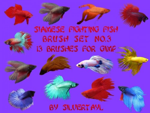 13 Siamese Fighting Fish Brushes
