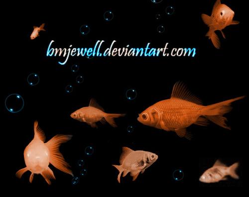 18 Different Goldfish Brushes