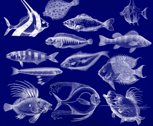 19 Elegant Fish Brushes for PS