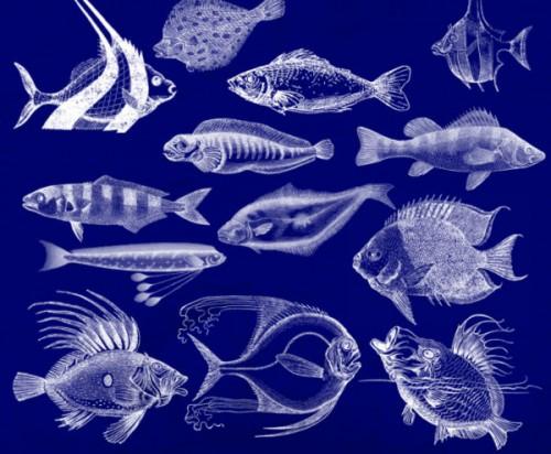 19 Elegant Fish Brushes for PS