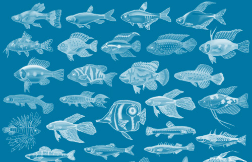 42 Fish Brushes for Download