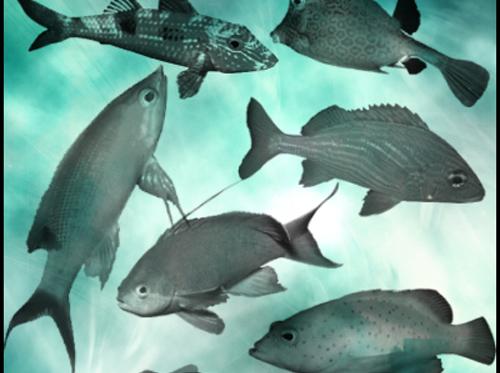 7 Large Free Fish Brushes