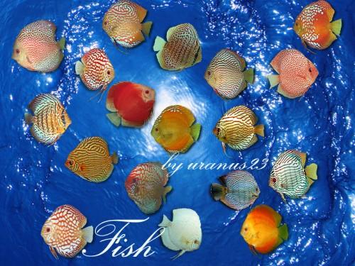 Beautiful Fish Photoshop Brushes
