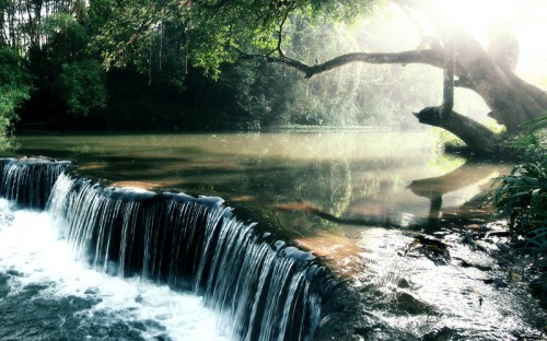 Rain-forest Creek Wallpaper