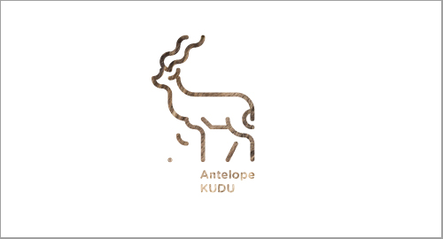 30 Days With Animals - Antelope KUDU
